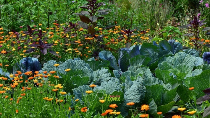natural pesticides for gardens